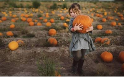 Membership Pumpkin Drive